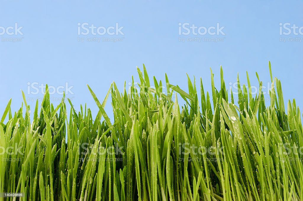 dew on grass royalty-free stock photo