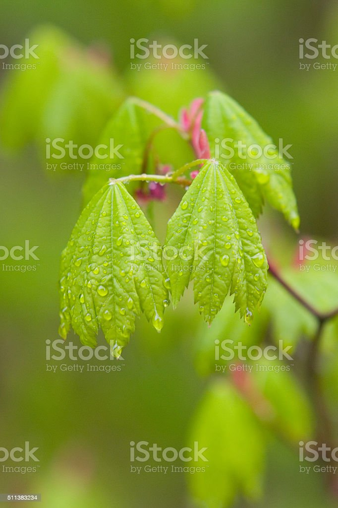 Dew on leaves stock photo