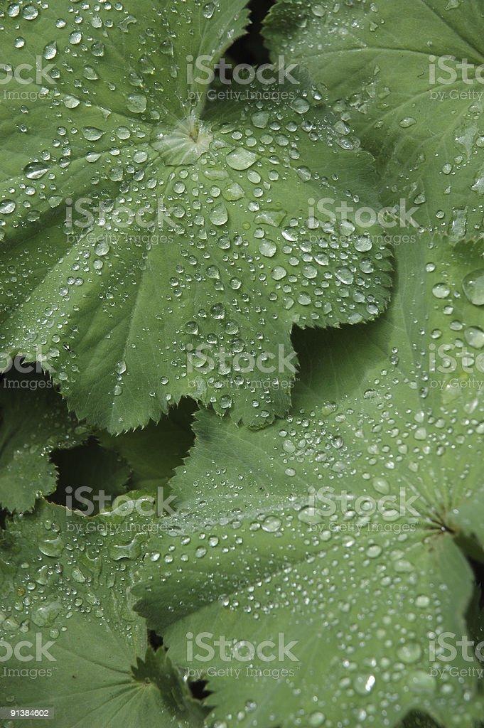 Роса на листья Стоковые фото Стоковая фотография