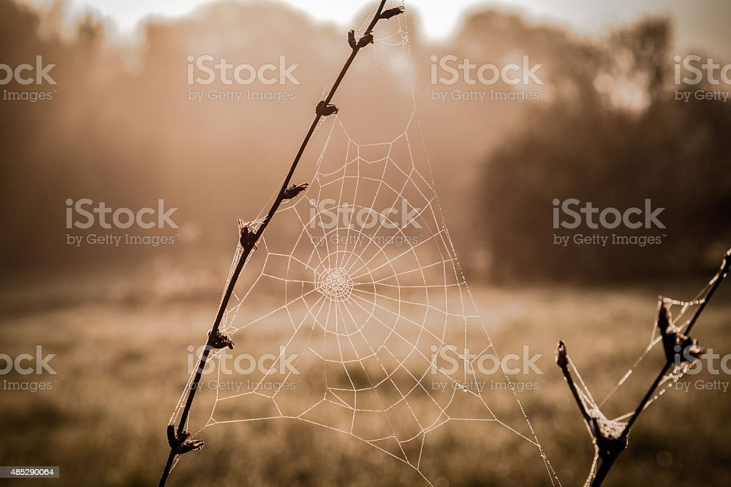 Dew on spiderweb closeup stock photo
