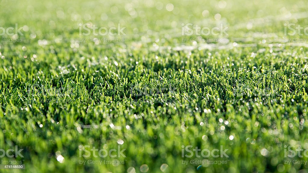 Dew on  the artificial grass. stock photo