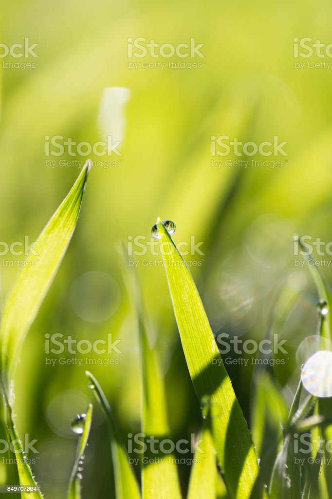 dew on the grass in nature stock photo