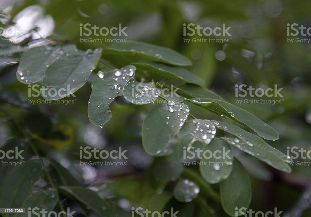 dew on the leaf royalty-free stock photo