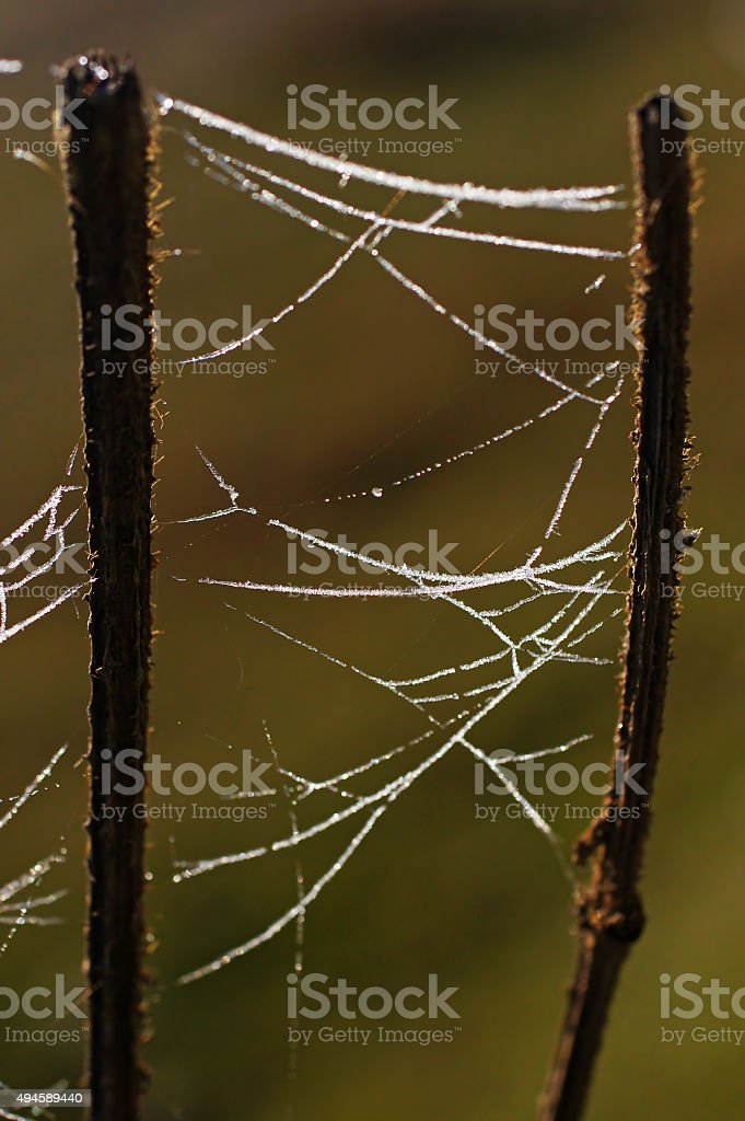 Dew On The Spider Web stock photo