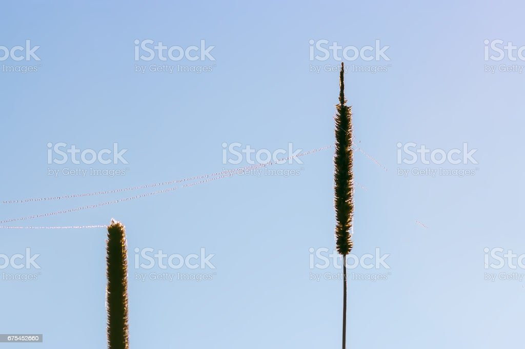 Dew On Web Between Blades Of Grass Closeup stock photo