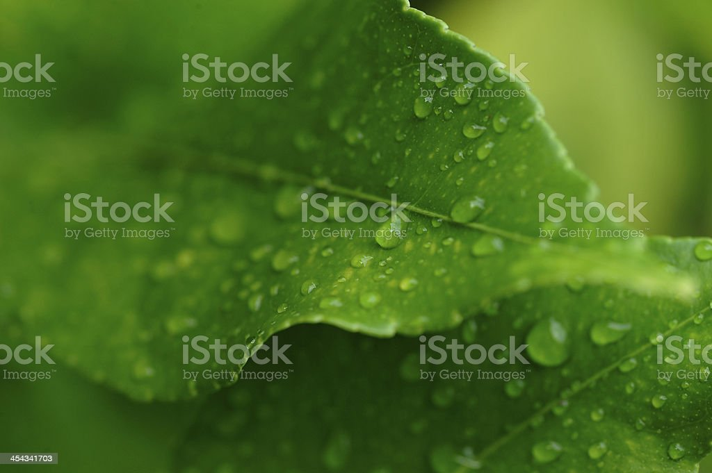 dew royalty-free 스톡 사진