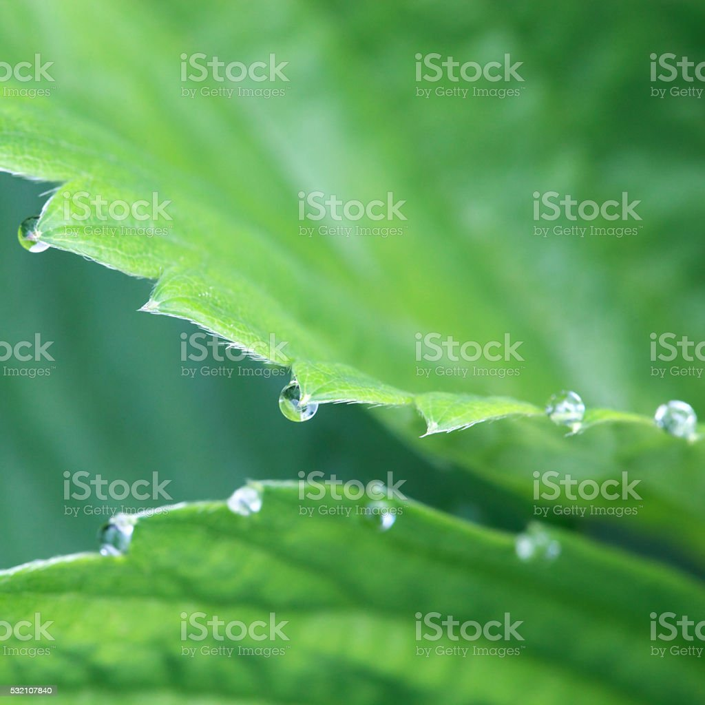 Dew stock photo