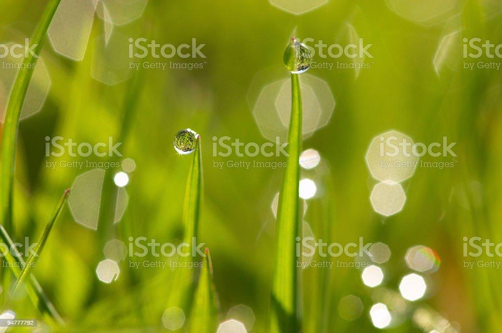 dew #1 royalty-free stock photo