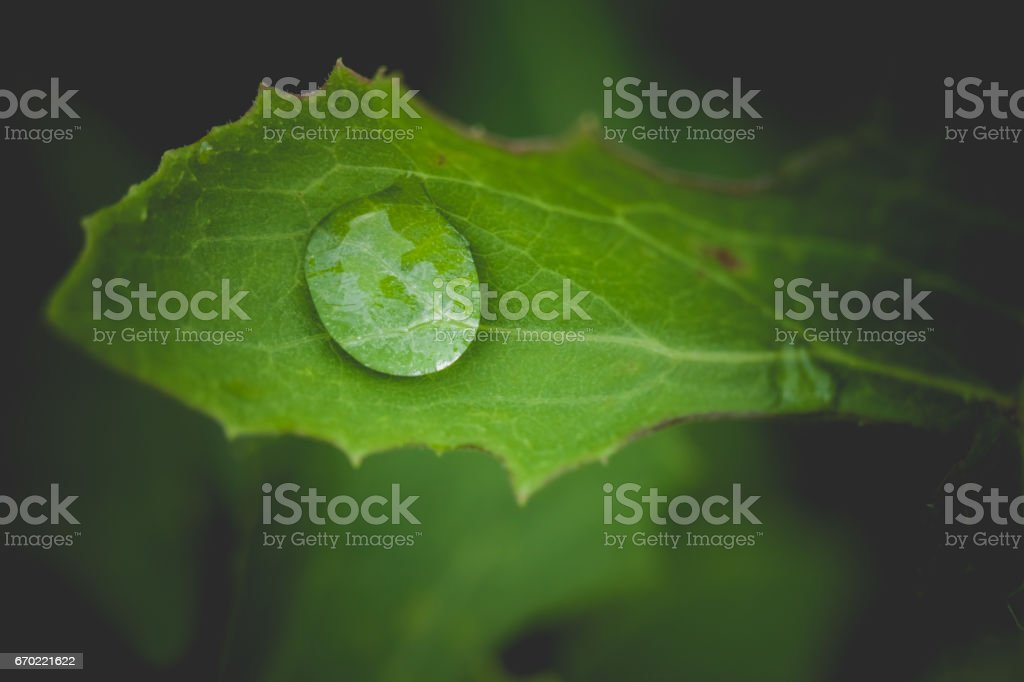 Dewdrop on a leaf stock photo
