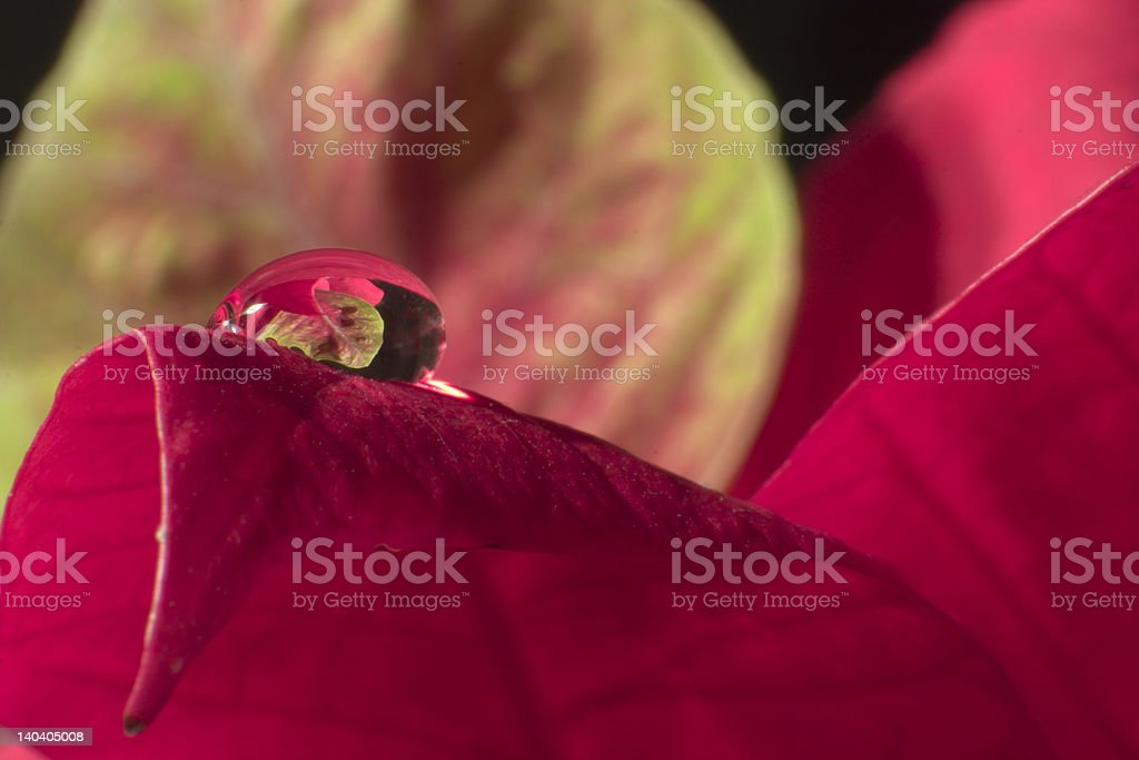 dewdrop - reflection royalty-free stock photo