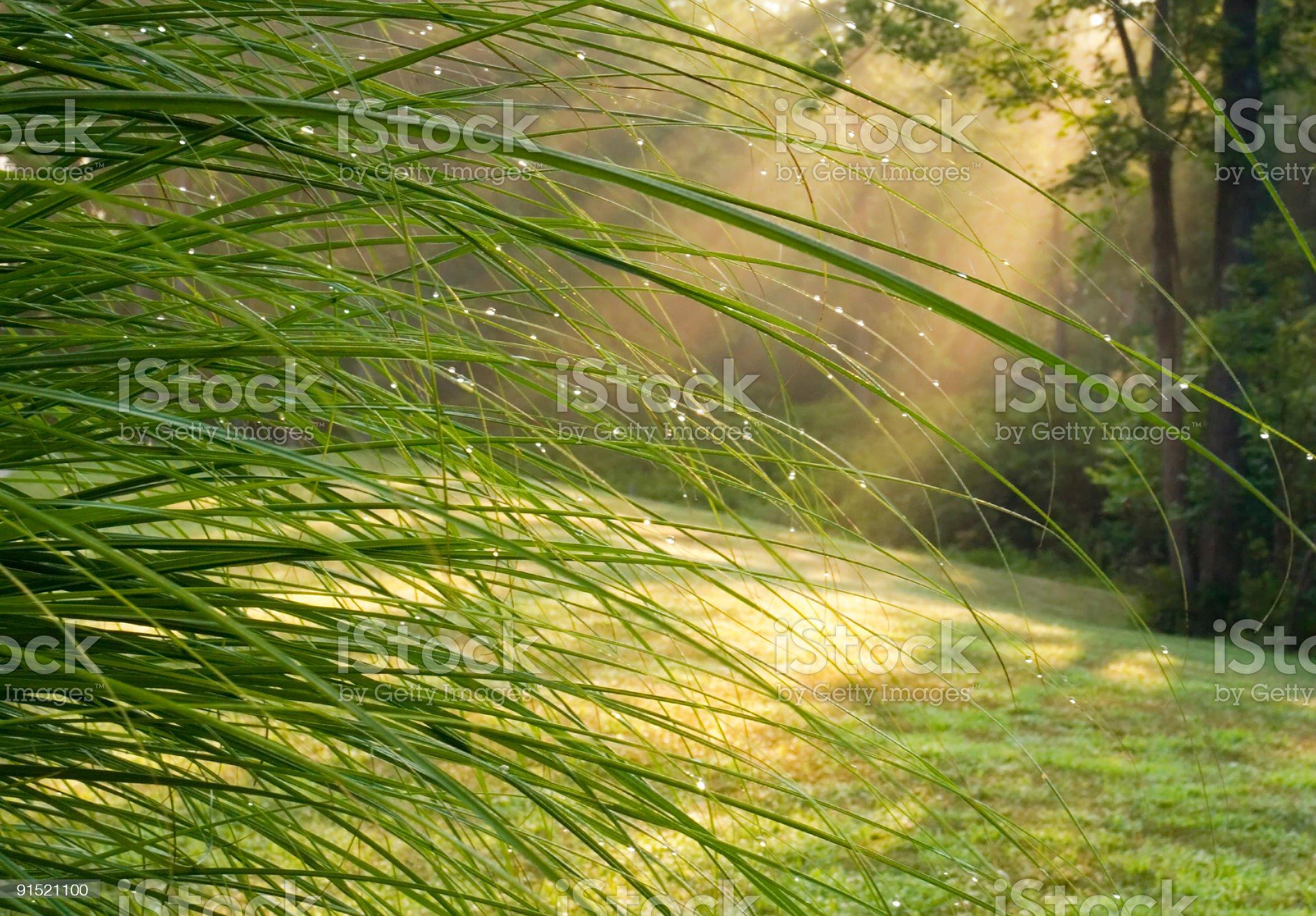 Dewdrops In Sunlit Garden royalty-free stock photo