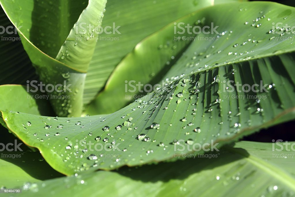 Dewdrops on green leaves stock photo