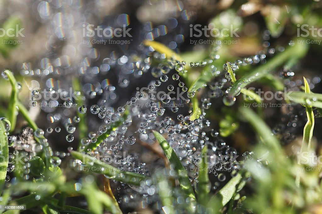 Dewdrops on spider's net stock photo