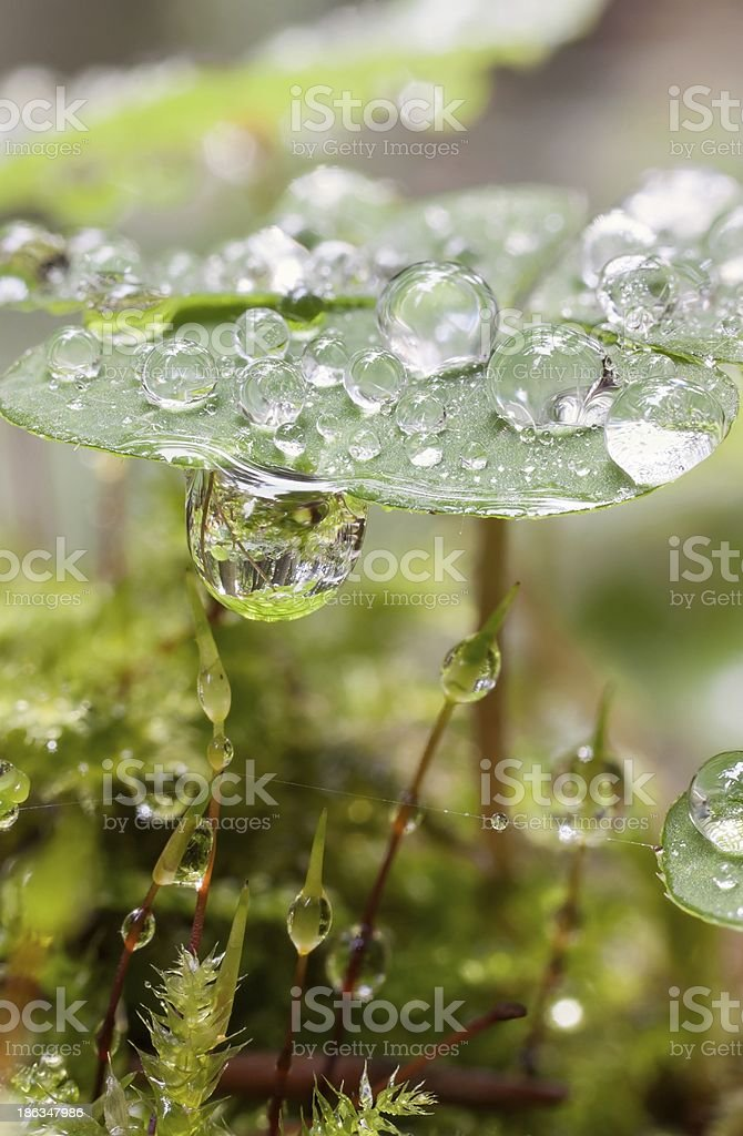 dewdrops stock photo