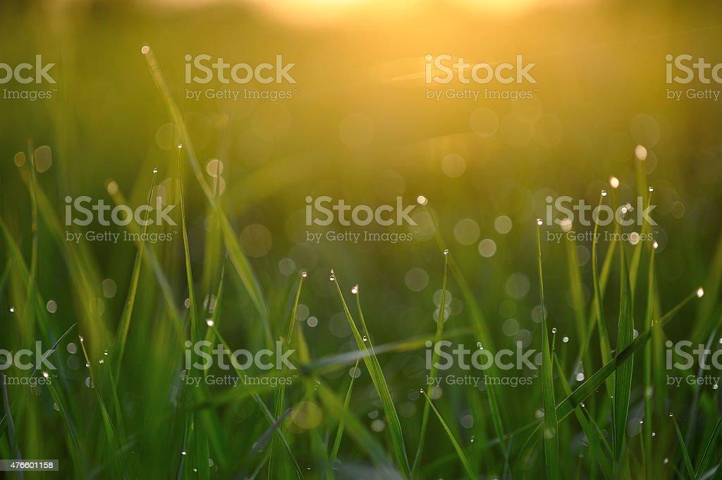 Dewdrops. stock photo