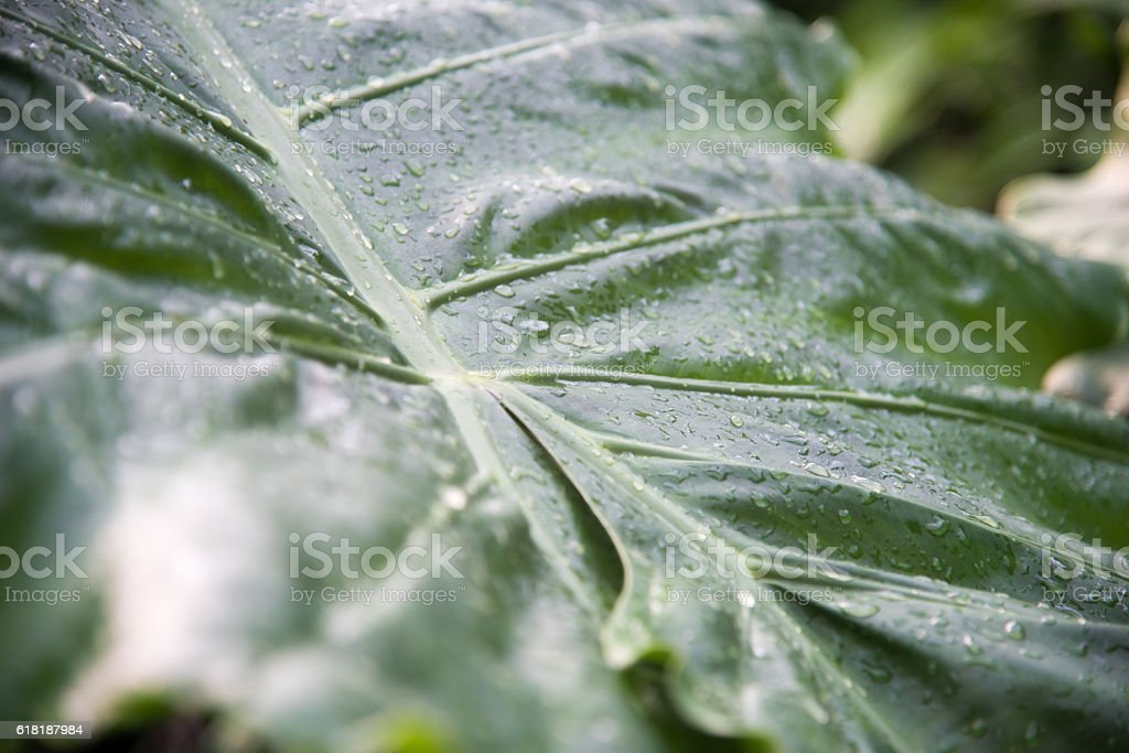 Dewdrops royalty-free stock photo