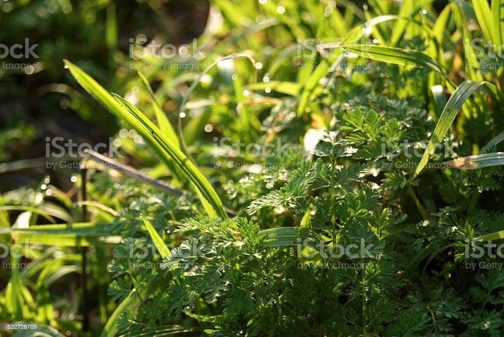 Dewed Green royalty-free stock photo