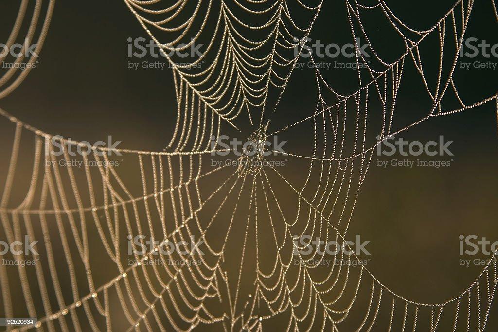Dewey Spider Web royalty-free stock photo