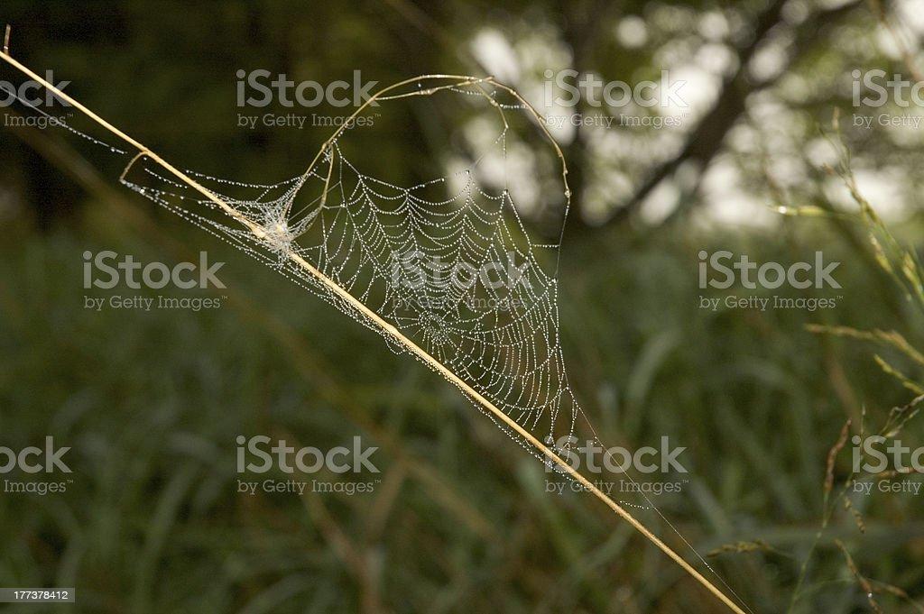 Dewy Web stock photo