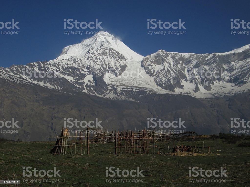 Dhaulagiri and animal compound royalty-free stock photo