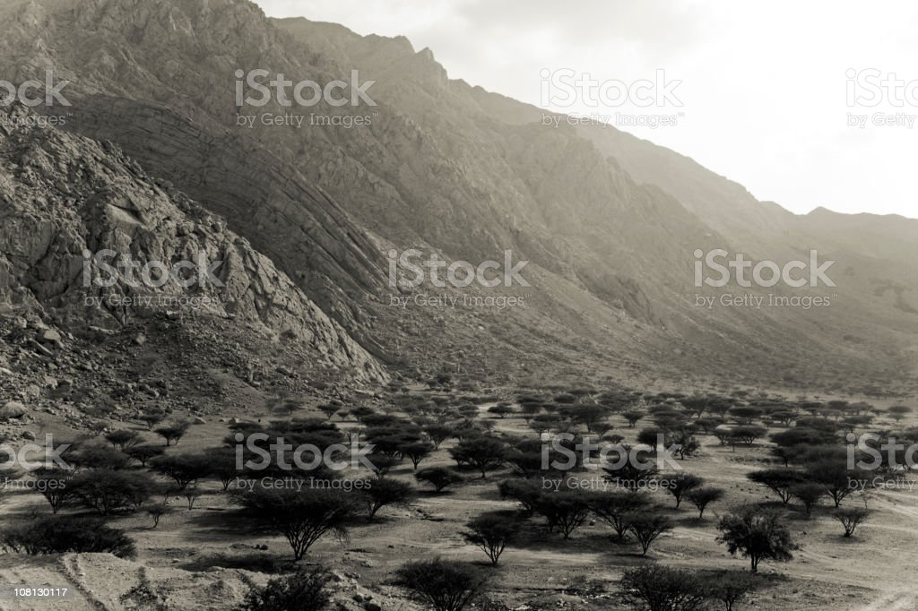 Dhaya Oasis United Arab Emirates stock photo