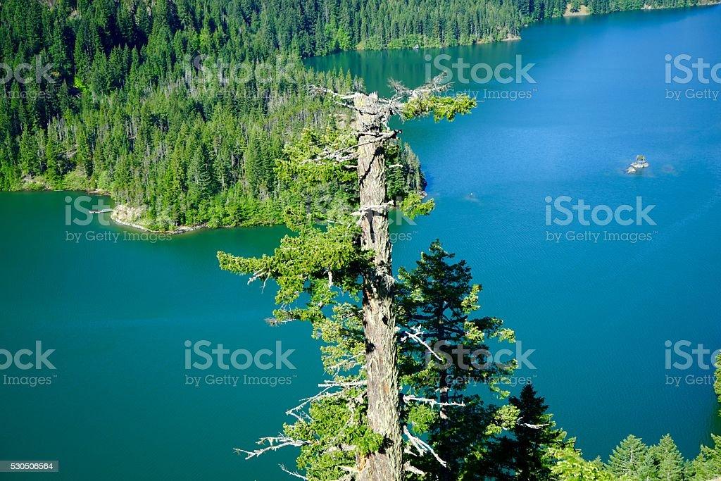 Diablo Lake Tree stock photo
