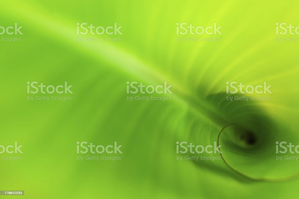 diagonal of a leaf royalty-free stock photo