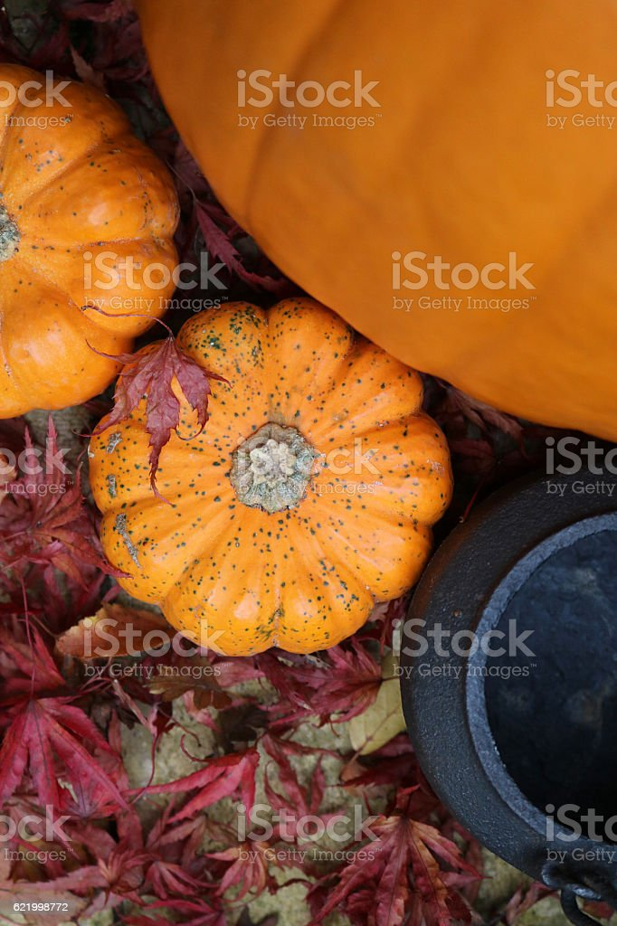 Diagonal pumpkins and cauldron in red leaves stock photo