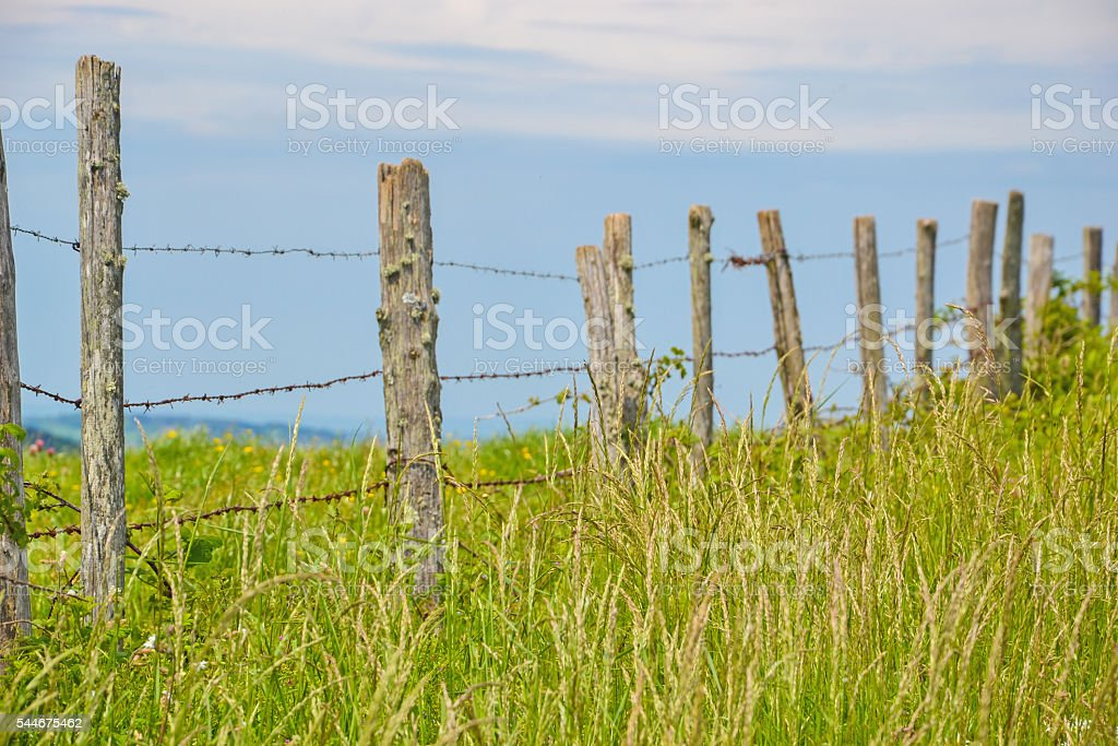 diagonal rural fence with barbed wire on meadow stock photo