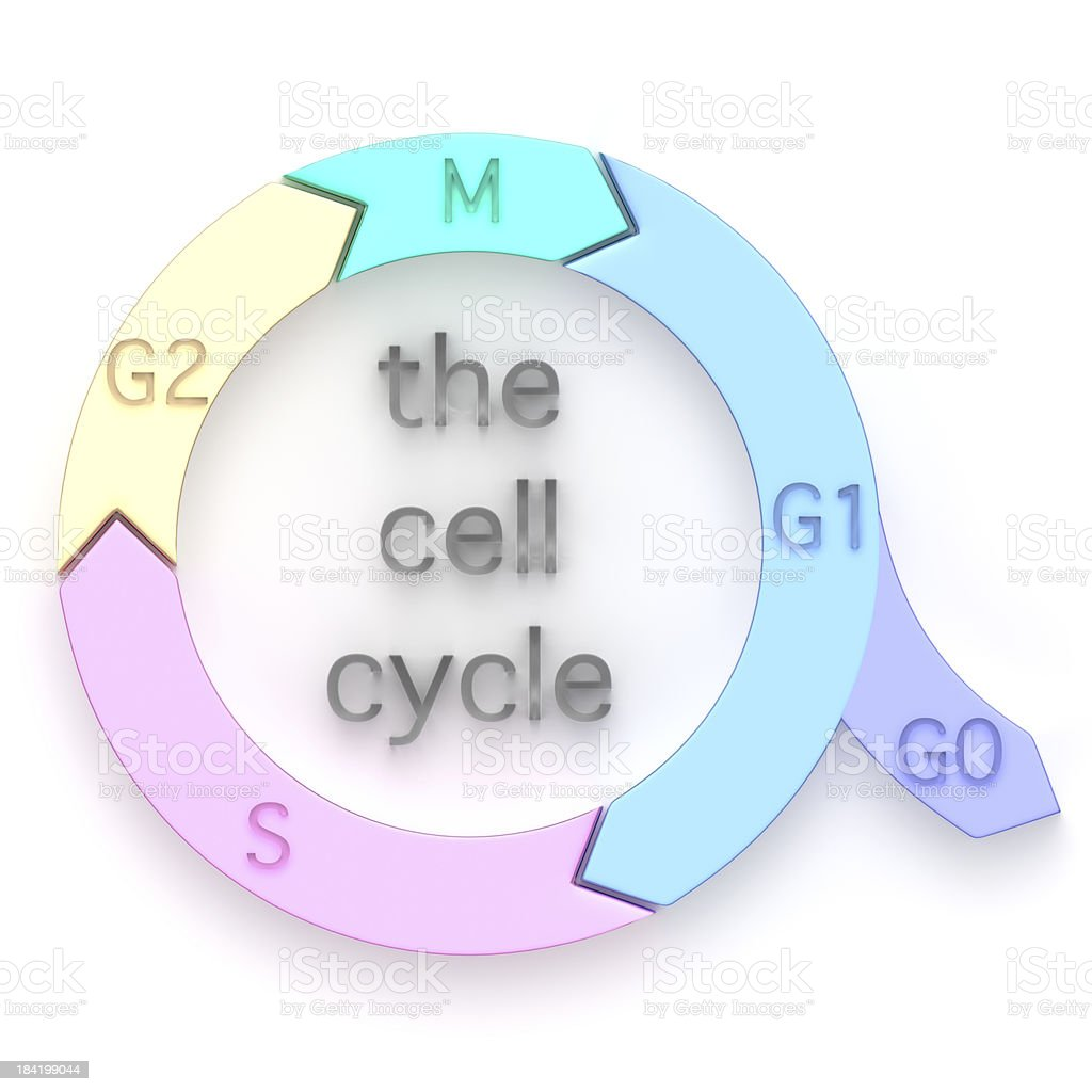 Diagram of the Cell Cycle royalty-free stock photo