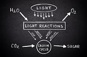 Diagram of the process of photosynthesis