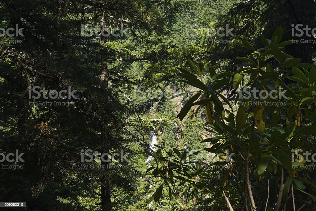 Diamond Creek Canyon stock photo