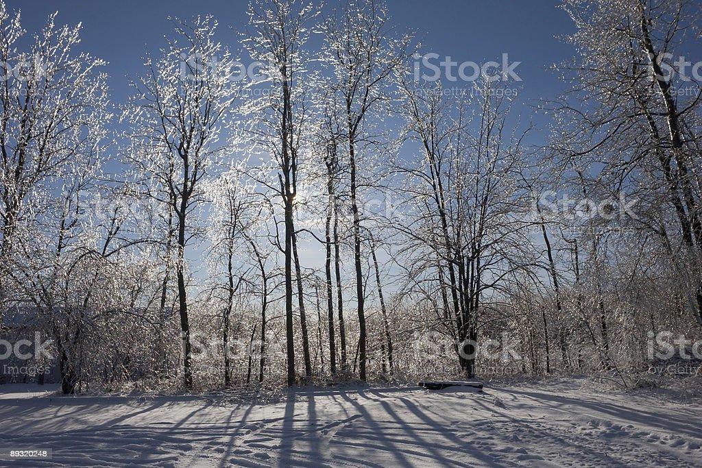 Diamond Trees stock photo
