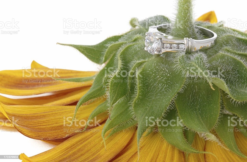 Diamond Wedding Ring Sitting Atop a Sunflower stock photo