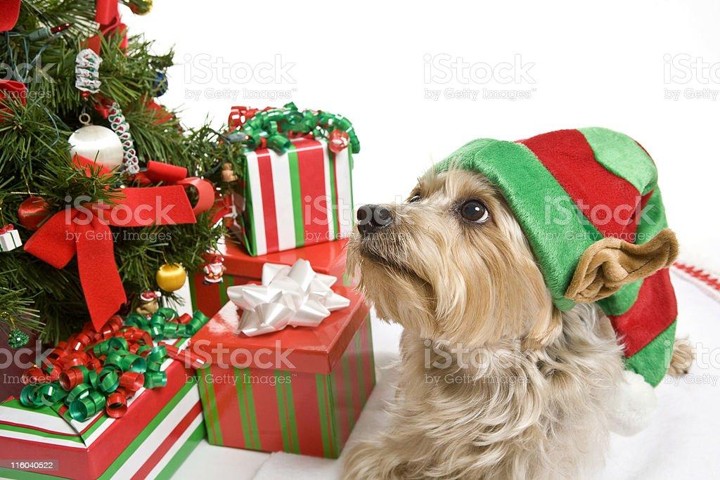 Did I Do a Good Job Santa? royalty-free stock photo