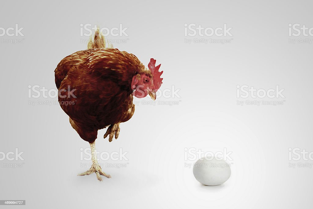 Did I do that? Cock stares at an egg stock photo