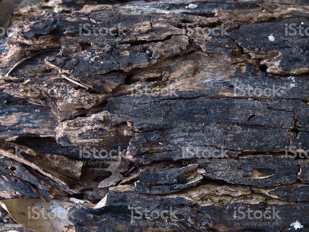 Dided Bark stock photo