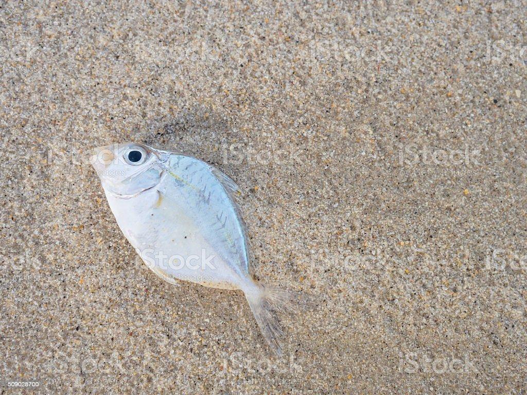 die fish stock photo