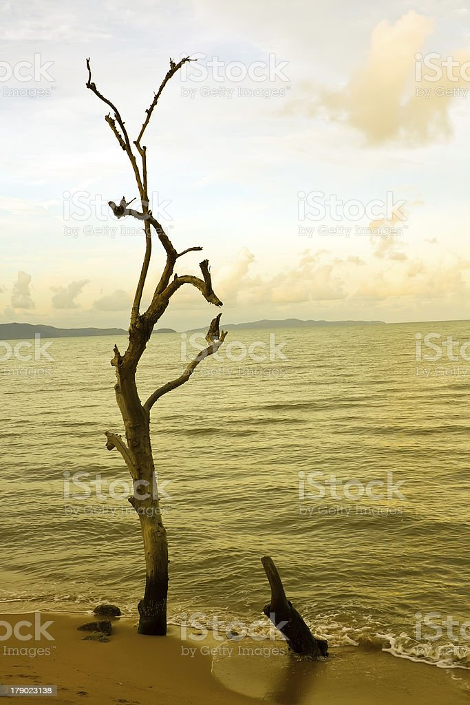 Die tree on the beach royalty-free stock photo