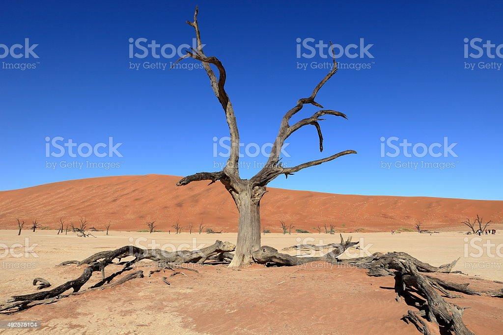 Die Wüste Namib mit dem  Sossusvlei in Namibia stock photo
