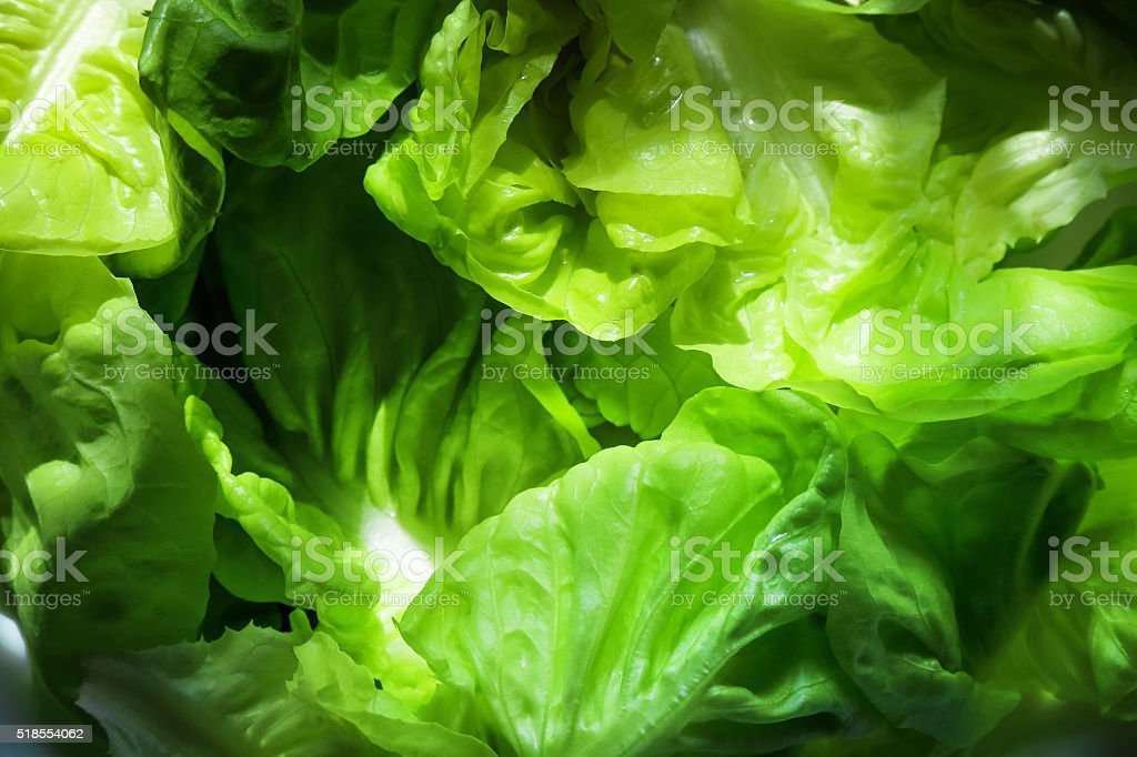 Diet meal, Lettuce, green background stock photo