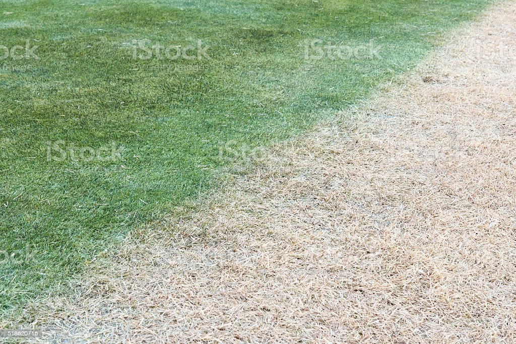 diffent color of grass lawn effected from sun shadow shade stock photo