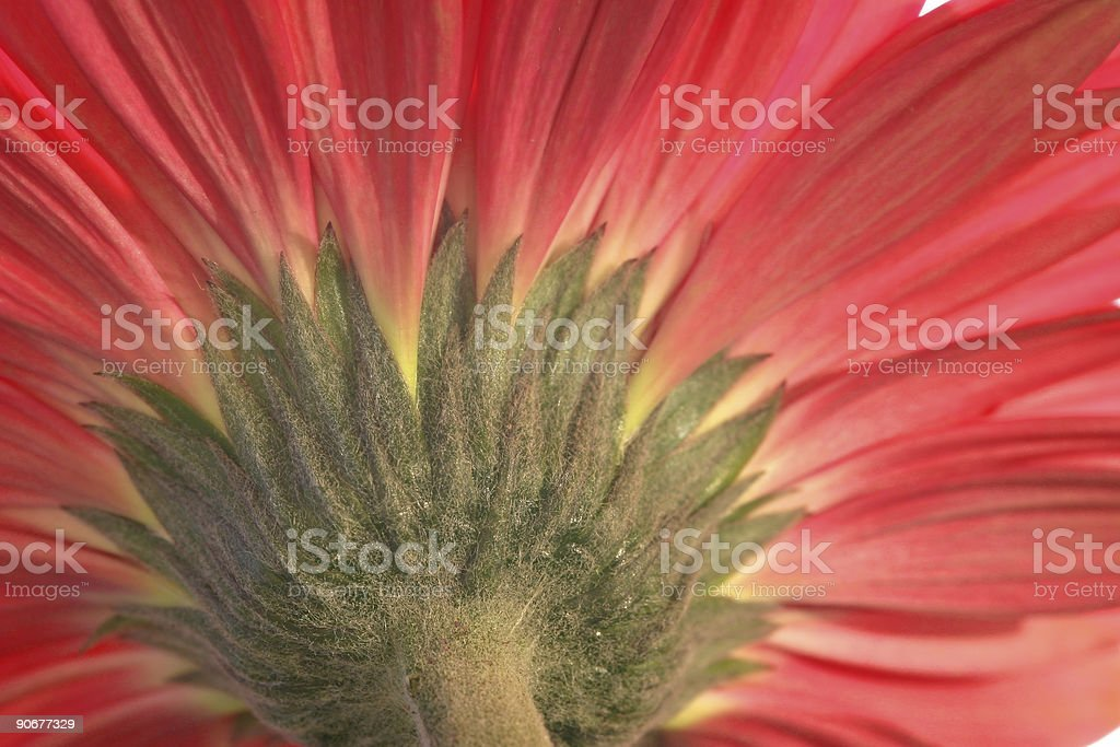 Different angle royalty-free stock photo