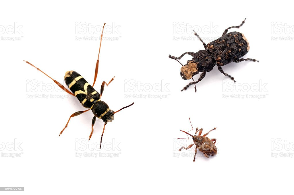different beetles stock photo