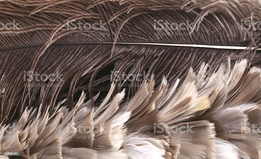 Different brown feathers. Close up. royalty-free stock photo