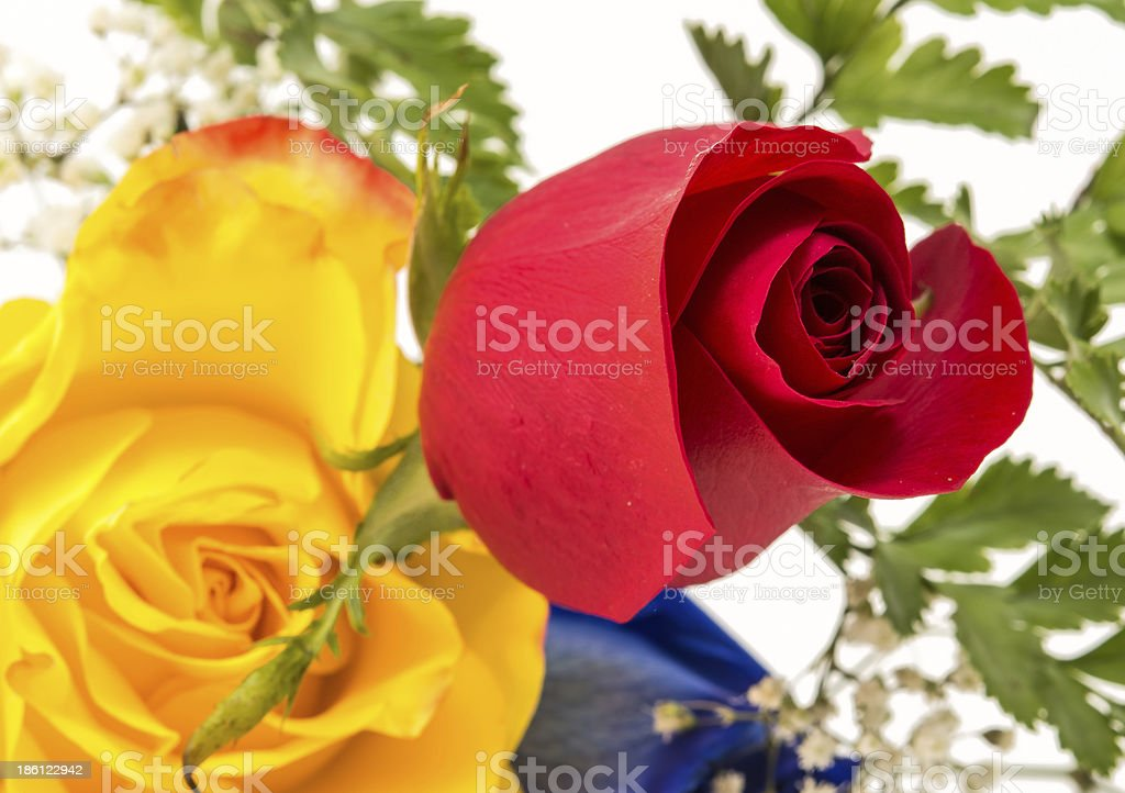 Different but equal in beauty royalty-free stock photo