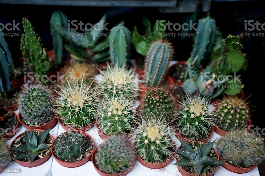 different cactus group stock photo