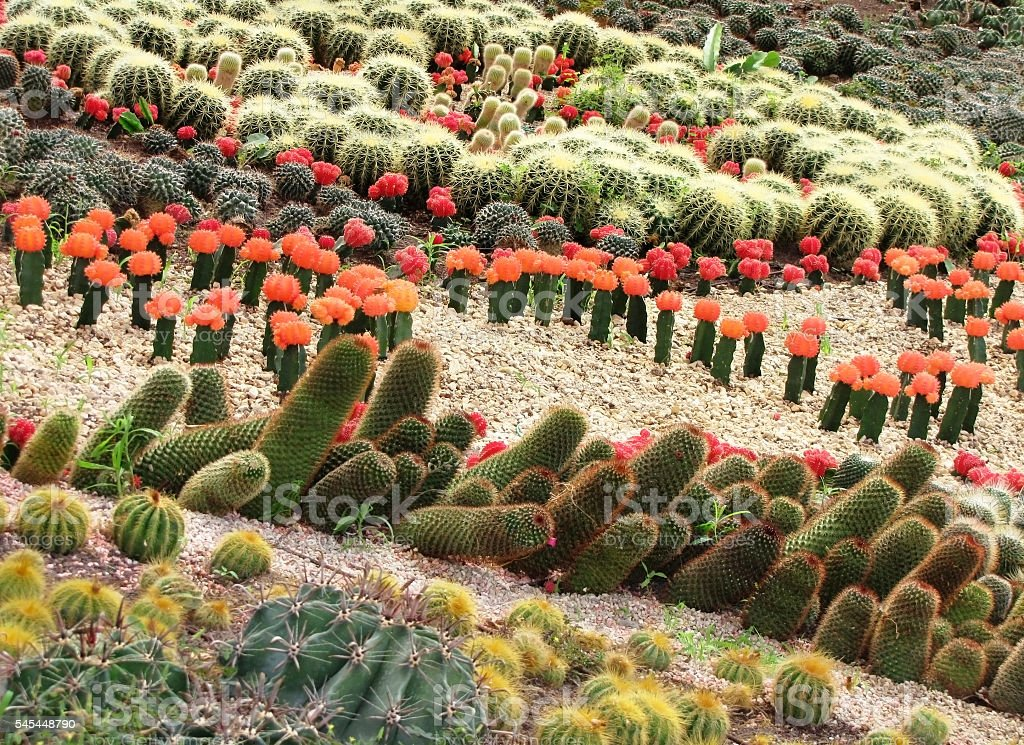 different cactuses in open space stock photo