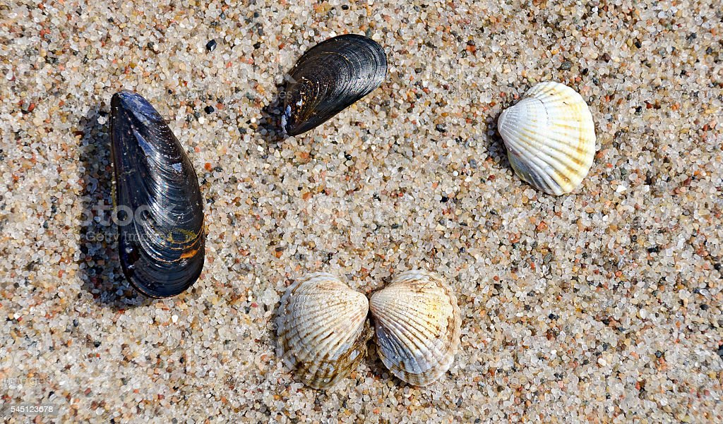 different clamshells stock photo