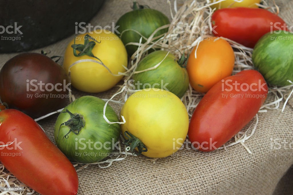 Different colour tomatoes, homegrown, red, yellow, orange, green, purple stock photo